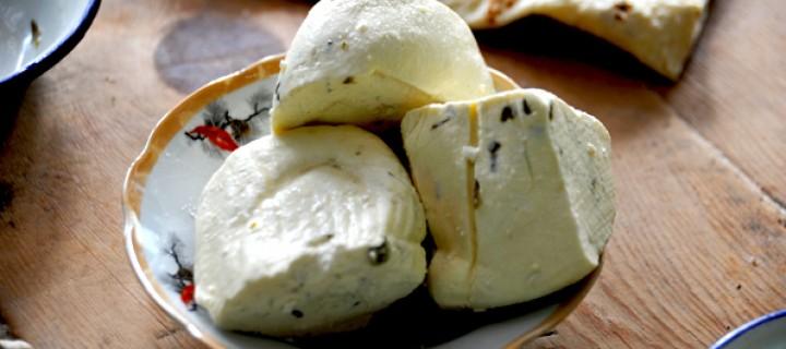 Peynir ve Yoğurt Yapmaya Davet!