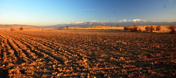 'Tarım Alanları da Satılacak'