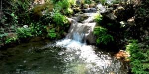 Suya Şükran Günü