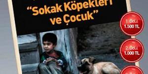 Sokak Hayvanlarına Destek Olmak için Yine Deklanşöre Basma Zamanı