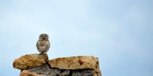 Guguk Kuşunun Sesiyle Uyanmak