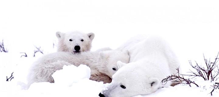 Kuzey Kutbu'nu Hep Beraber Kurtaracağız