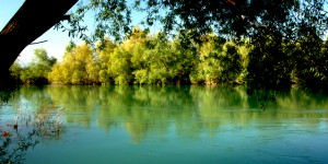 Doğal Yok Oluşa Çeyrek Kala, Doğal Ortamlara ve Yeşiline Sahip Çık!