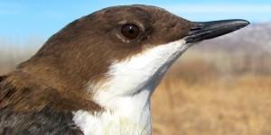 KuzeyDoğa Derneği, 2012 Sezonunda 4.918 Kuş Halkaladı