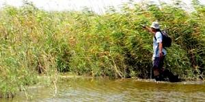 Gediz Deltası'nın Bitkileri Araştırılıyor