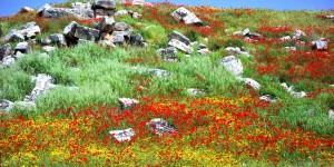 Anadolu'da Bahar