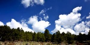 Ormanlara Teknolojik Koruma