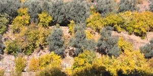 Muğla'da Yerel Tohum Takas Şenliği