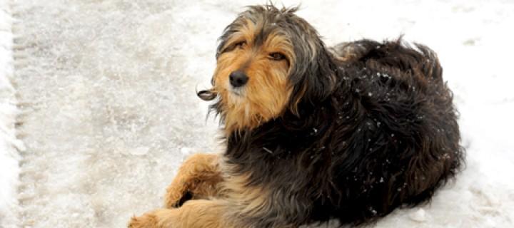 Türkiye Hayvan Hakları Konusunda Gerilemenin Eşiğinde