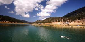 Sorgun Barajı'nın Âşık Ördekleri