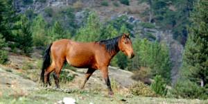 Anamas'ın Yılkı Atları ve Nail Abbas Sayar