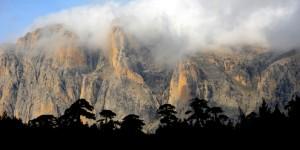 Ağaçlar ve Kayalar