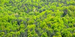'81 İlde 81 Orman'