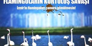 Flamingoların Kurtuluş Savaşı