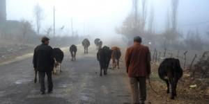 Yakaavşar'da Sisli Bir Sabah