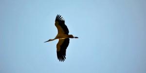 Küresel Isınma Kuşları da Tehdit Ediyor