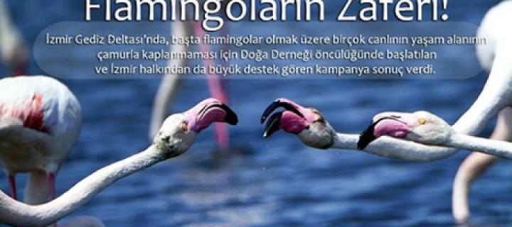 Flamingoların Zaferi