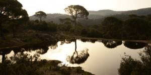 Su, Yaşamın Kaynağı Doğanın Aynasıdır