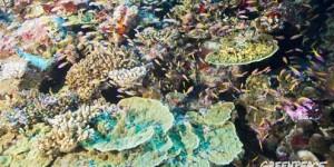 ABD Donanmasına Ait Savaş Gemisi Dünya Mirası Mercanları Tahrip Etti