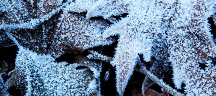 29 Ocak / Şiddetli Soğuklar