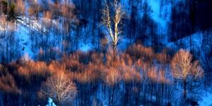 Ağaçlara Vuran Işık