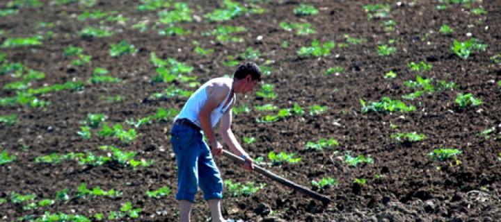 10 Ocak / Dünya Tarımsal Üretim Günü