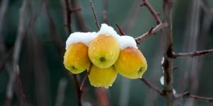 Anamas'ın Elmasına Kar Yağmış