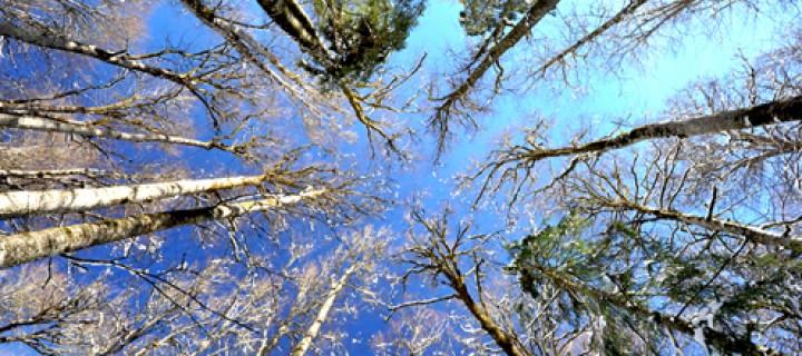 Yağmur Ormanlarıyla İlgili Bilmediğimiz 32 Şey