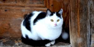 Kar Yağışı İzleyen Kedi