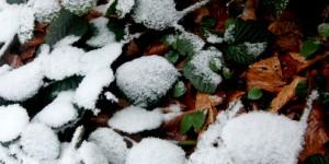 2 Şubat / Fırtına, Dünya Sulakalanlar Günü