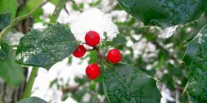 Karlar Altında Kazdağları Bitkileri