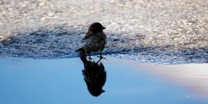 18 Şubat / Kuşların Çiftleşme Zamanı