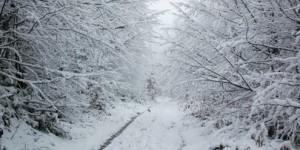 11 Şubat / Şiddetli Soğuklar