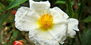 Batı Karadeniz Çiçekler Bahçesidir
