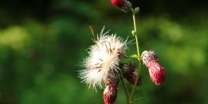 Çiçekler Bahçesinden