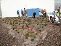 Bolu'da Yeşil Çatı Dönemi Başladı