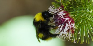 26 Nisan / Arılarda Oğul Başlangıcı, Güllerin Budanma Zamanı