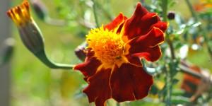 23 Nisan / Çiçek Fırtınası. Dünya Çocuk Günü