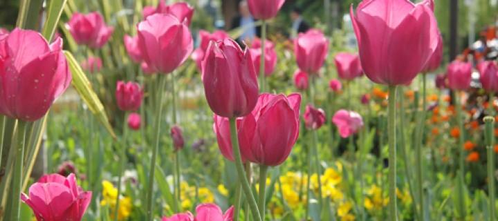 15 Nisan / Lale Mevsiminin Başlangıcı, Camuskıran Fırtınası