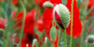 3 Nisan / Çiçeklenme Döneminin Başlaması, Dünya Yaşlılar Günü