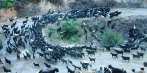 Karakoyunluların Anamas Göç Yolu