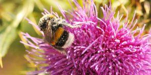 Doğanın Gerçek Mucizesi; Arılar