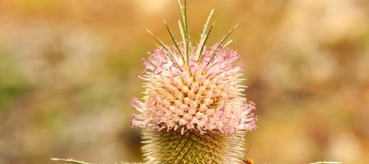 Batı Karadeniz'in Çiçekleri