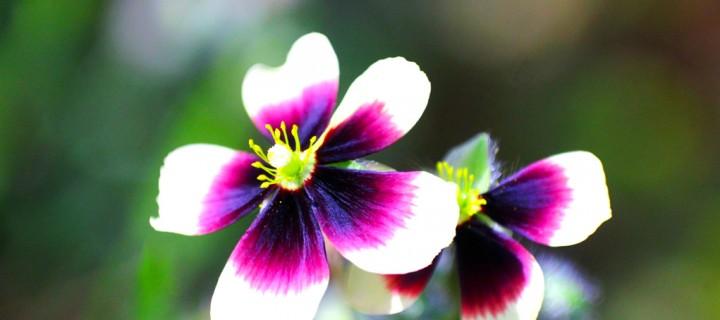 İda'nın Çiçekleri -5