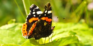 Kelebekler Güzeldir