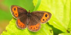 Sarıçiçek Dağı'nın Büyülü Kelebeği
