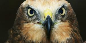 Dünya Biyolojik Çeşitlilik Günü, Iğdır Aras Nehri Kuş Cenneti'nde Kutlandı