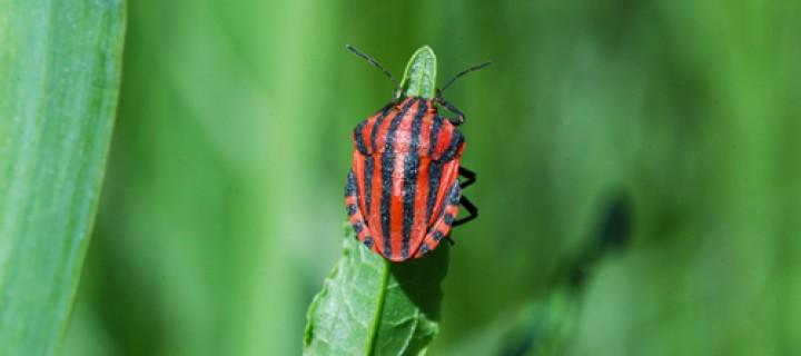 Böcek Farkındalığı Yolunda