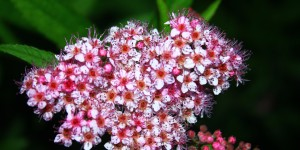 İda'nın Çiçekleri -8