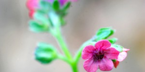 Yenice'nin Yaban Çiçekleri -8